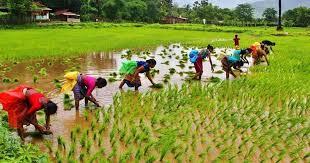 Telangan Farmers